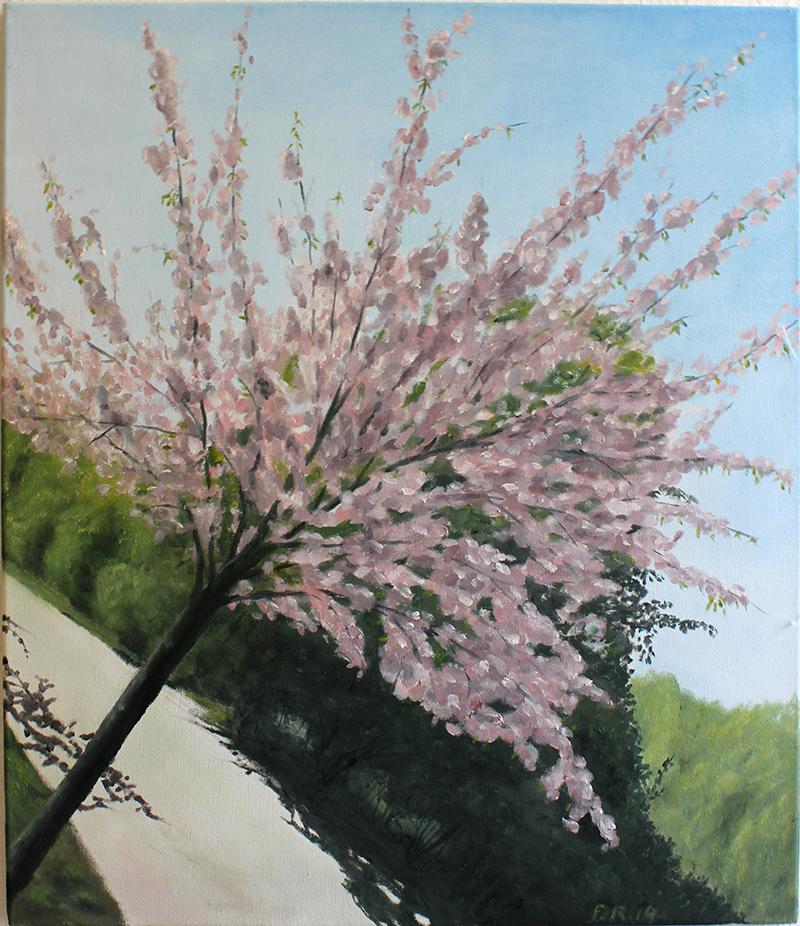 """Japanische Kirsche"" 60 x 50 cm, Öl auf Leinwand, Felix-Rieger 2014"